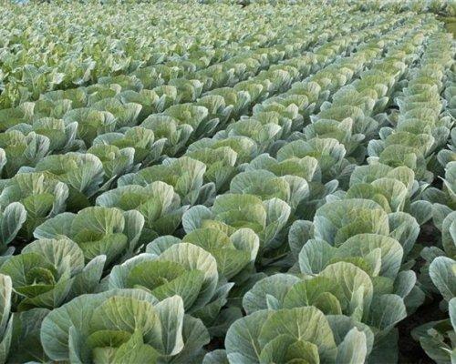 Код 11100000000: Отходы растениеводства (включая деятельность по подготовке продукции к сбыту)