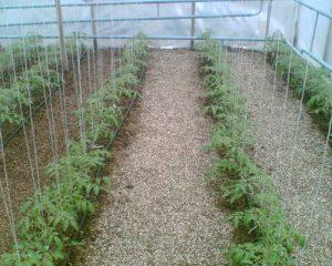 Код 11101000000: Отходы от предпосевной подготовки семян