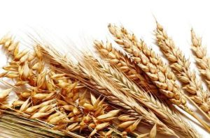 Код 11112002495: зерноотходы мягкой пшеницы