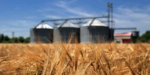 Код 11112003495: зерноотходы меслина