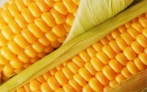 Код 11112004495: зерноотходы кукурузы