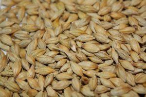 Код 11112005495: зерноотходы ячменя