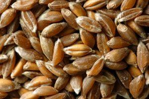 Код 11112012495: зерноотходы тритикале