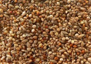 Код 11112013495: зерноотходы чумизы