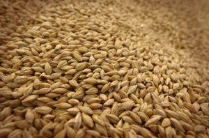 Код 11112014495: зерноотходы прочих зерновых культур