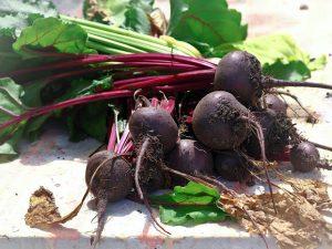 Код 11121002235: ботва от корнеплодов, другие подобные растительные остатки при выращивании овощей, загрязненные землей