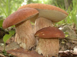 Код 11131000000: Отходы при выращивании грибов