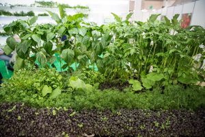 Код 11140000000: Отходы при выращивании цветов в защищенном грунте
