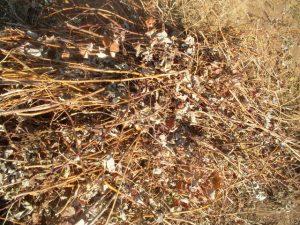 Код 11141111235: растительные остатки при выращивании цветов, загрязненные землей