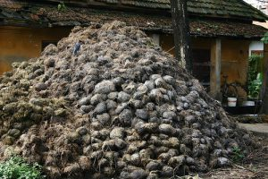 Код 11200000000: Отходы животноводства (включая деятельность по содержанию животных)