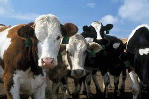 Код 11211000000: Навоз крупного рогатого скота
