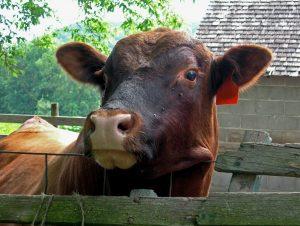 Код 11211001334: навоз крупного рогатого скота свежий
