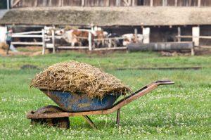 Код 11211002295: навоз крупного рогатого скота перепревший