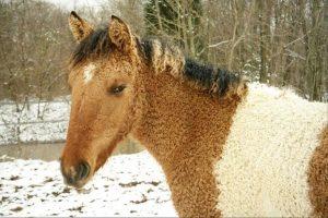Код 11220000000: Отходы разведения и содержания лошадей и прочих животных семейства лошадиных отряда непарнокопытных