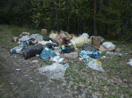 Свалка медицинских отходов: неожиданная находка в лесу